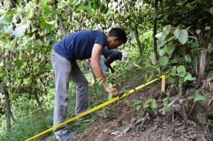 Plan Yaque Examina Impacto del Cultivo de la Tayota a la Relación a la Erosión del Suelo