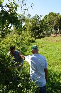 Plan Yaque Apoyo Plantaciones de Bambú y de Almendros en Jarabacoa