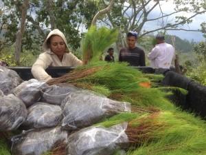 Plan Yaque Retoma las Plantaciones en Constanza
