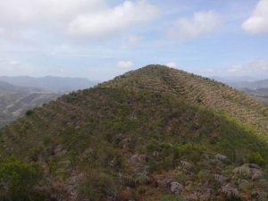 Reforestación(1)
