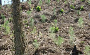 Reforestación(2)