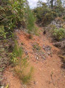 Reforestación(3)