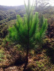 Reforestación(4)